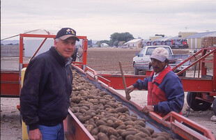 Loading potatoes at Doug Gross's operation